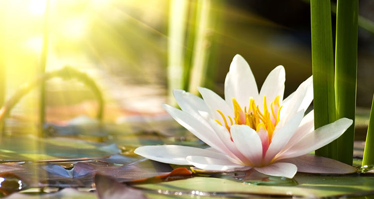 福智真如上師勉勵弟子:珍惜你的善根,讓它增長廣大